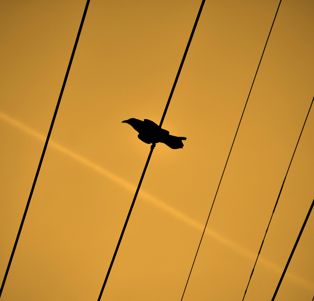 crow-wire